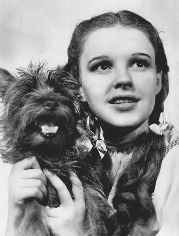 Photo of Judy Garland: American actress, singer and vaudevillian